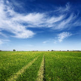 Summer field with tracks of car on grass Royalty Free Stock Photo