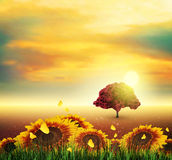 Summer, Field, Tree, Sky, Sun, Sunset, Grass, Sunflowers, Butter. Summer Landscape With Field, Sky, Sun, Sunset, Tree, Grass, Sunflowers And Butterflies Stock Photo