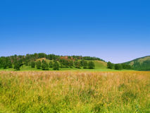 Summer field with trees on the hill Stock Photography