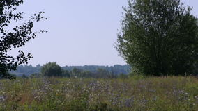 Summer field and trees scenic view. In Russia stock video footage