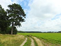 Simple way, trees, field and beautiful cloudy sky, Lithuania Royalty Free Stock Photo