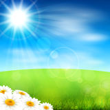 Summer field. Vector illustration summer field with blossoming daisies Royalty Free Stock Image