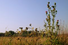 Summer field in village Royalty Free Stock Images