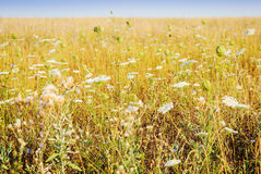 Summer field with wild flowers Stock Photo