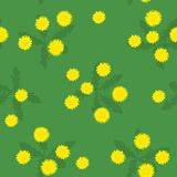 Summer field of yellow dandelions seamless pattern. Summer or spring glade of bright yellow green dandelions simple seamless pattern Royalty Free Illustration