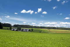Summer fields Stock Photo