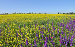 Free Summer Fields Royalty Free Stock Photo - 5423985