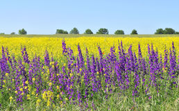 Free Summer Fields Royalty Free Stock Photo - 5424015