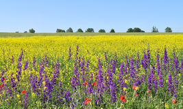 Summer Fields Royalty Free Stock Image