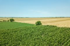 Summer Fields Aerial. Aerial green field view. Agriculture field. Aerial. Agriculture stock photography