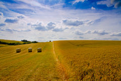 Summer fields , Cambridgeshire. Fields of English wheat and hay bales on bright summers day Royalty Free Stock Photos