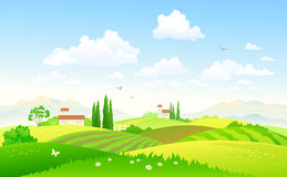Summer fields. Illustration of a beautiful green countryside Royalty Free Stock Photography