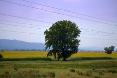 Summer fields landscape Stock Image