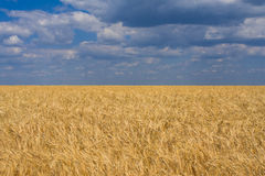 Summer fields Royalty Free Stock Images