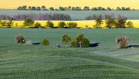 Summer fields, ripening grain crop fields in Germany. Summer fields, ripening grain crop fields .Germany Stock Photo