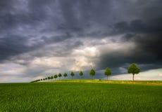 Summer fields, ripening grain crop fields. In Germany Royalty Free Stock Photos