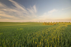 Summer fields, ripening grain crop fields Stock Image