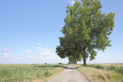 Summer Fields. Rural road leading into fields,  seamed with big trees, in front of a blue sky with some clouds on the horizon Royalty Free Stock Photography