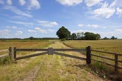 Summer fieldscape Stock Image