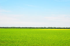 Summer filed landscape Royalty Free Stock Photo