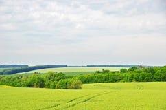 Summer filed landscape Stock Image