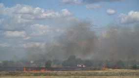 Firefighters stand near a fire engine and are preparing to put out a fire in the field stock video