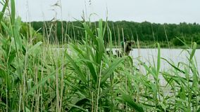 Summer fishing. Fishermen fishing on river. High green grass on background fish stock footage