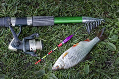 Summer fishing on the lake with a fishing rod. Morning catch of fish roach on a fishing rod with a float Stock Photography