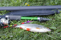 Summer fishing on the lake with a fishing rod. Morning catch of fish roach on a fishing rod with a float Stock Photos