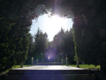 Summer Flare. Sun flare through trees, leaves and branches at park at sunny summer day Royalty Free Stock Photos