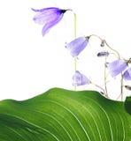 Summer flora Stock Photo