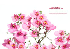 Summer flora Royalty Free Stock Photos