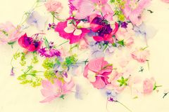 Summer, floral, artistic background with variety of petals and colors. Summer, floral, artistic background with variety of colourful petals and colors Stock Photos