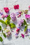 Summer, floral, artistic background with variety of petals and colors. Summer, colourful, artistic background with variety of petals and colors Stock Images