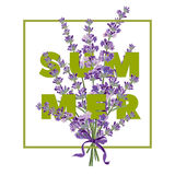 Summer floral background with beautiful lavender flowers on white background. Multicoloured typography greeting card Stock Photography