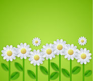 Summer floral background with daisy flowers. Vector illustration Stock Photography