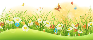 Summer floral banner Royalty Free Stock Photos