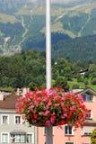 Summer Floral Baskets Stock Image