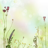 Summer floral border Royalty Free Stock Images