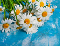 Summer Floral card with chamomile flower over blue vintage paint Royalty Free Stock Images