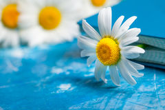 Summer Floral card with chamomile flower over blue vintage paint Stock Photography