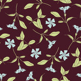 Summer floral seamless vector pattern Royalty Free Stock Photography