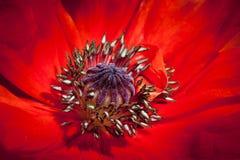 Summer flower. A macro close up of a summer flower Stock Photo