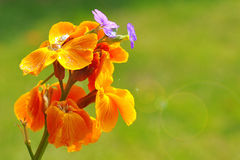 Summer flower. Colorful summer flower on blur background Royalty Free Stock Photos