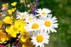 Summer flower. Photo of Summer flower with grass in the background Stock Photos