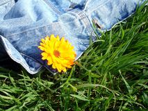 Summer flower. Green grass Stock Photo
