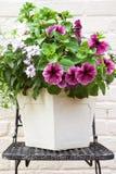 Summer flower arrangement stock images