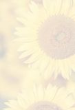 Summer Flower Background Royalty Free Stock Photography