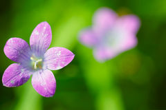 Summer flower background Stock Images