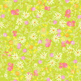 Summer flower background Royalty Free Stock Image